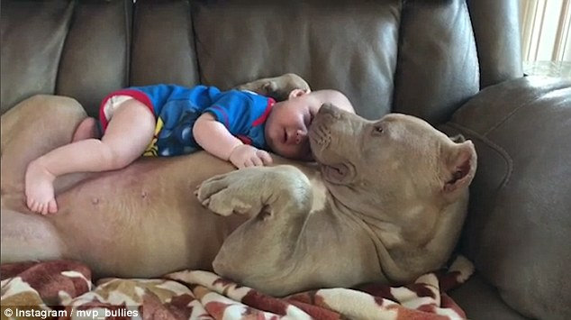 bulldog_baby
