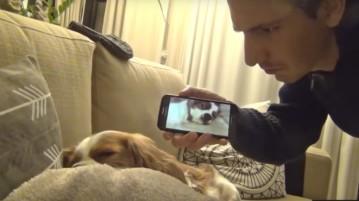 dog_snoring